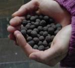 Eisenkugeln - die Farbe der Shar-Pei Zunge